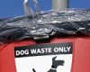 Dog owner fined for falling foul of the law