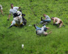 Brockworth welcomes the world for Cheese Rolling