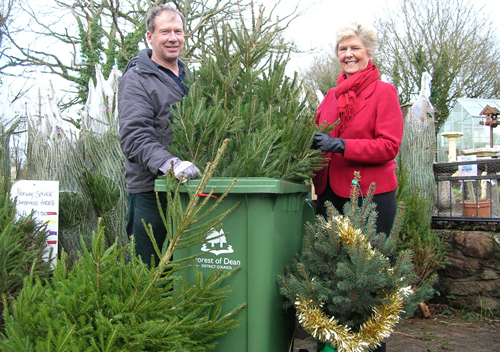 Christmas Tree Recycling Gloucester : Forest residents can recycle their christmas trees