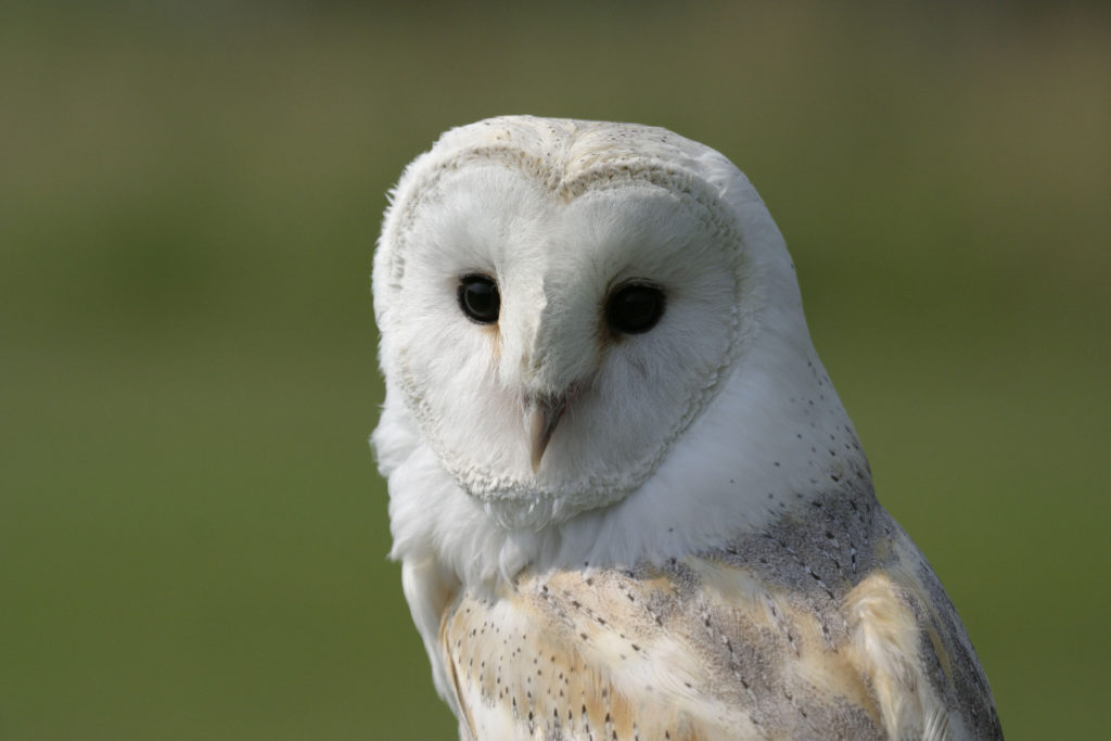 Over £30,000 raised to help Gloucestershire barn owls ...